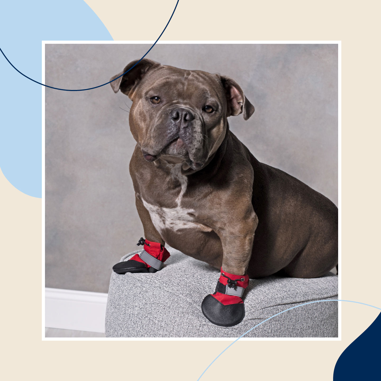 dog winter clothes - boots