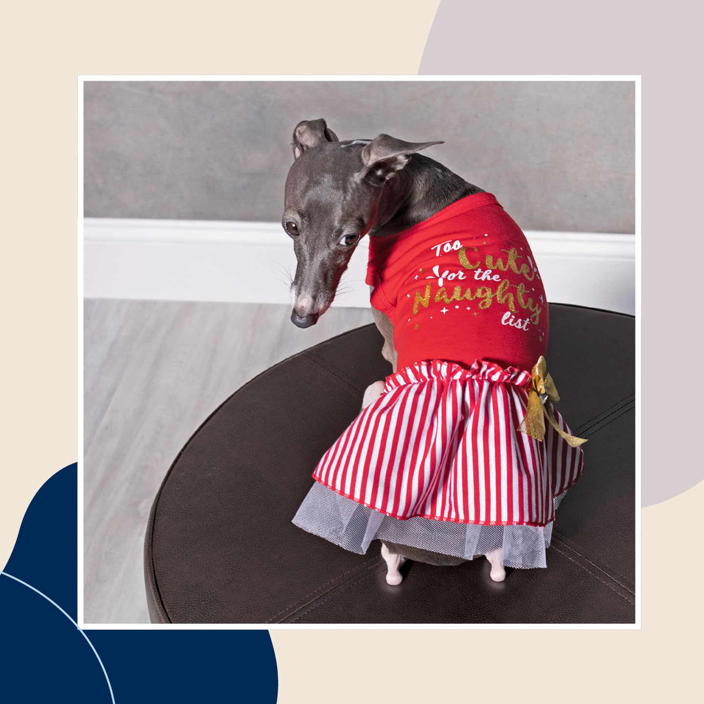 dog winter clothes - holiday dress