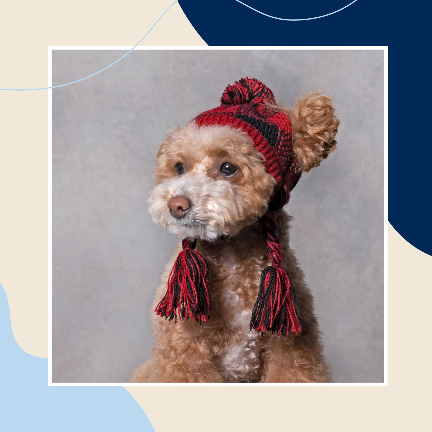 dog winter clothes - hats
