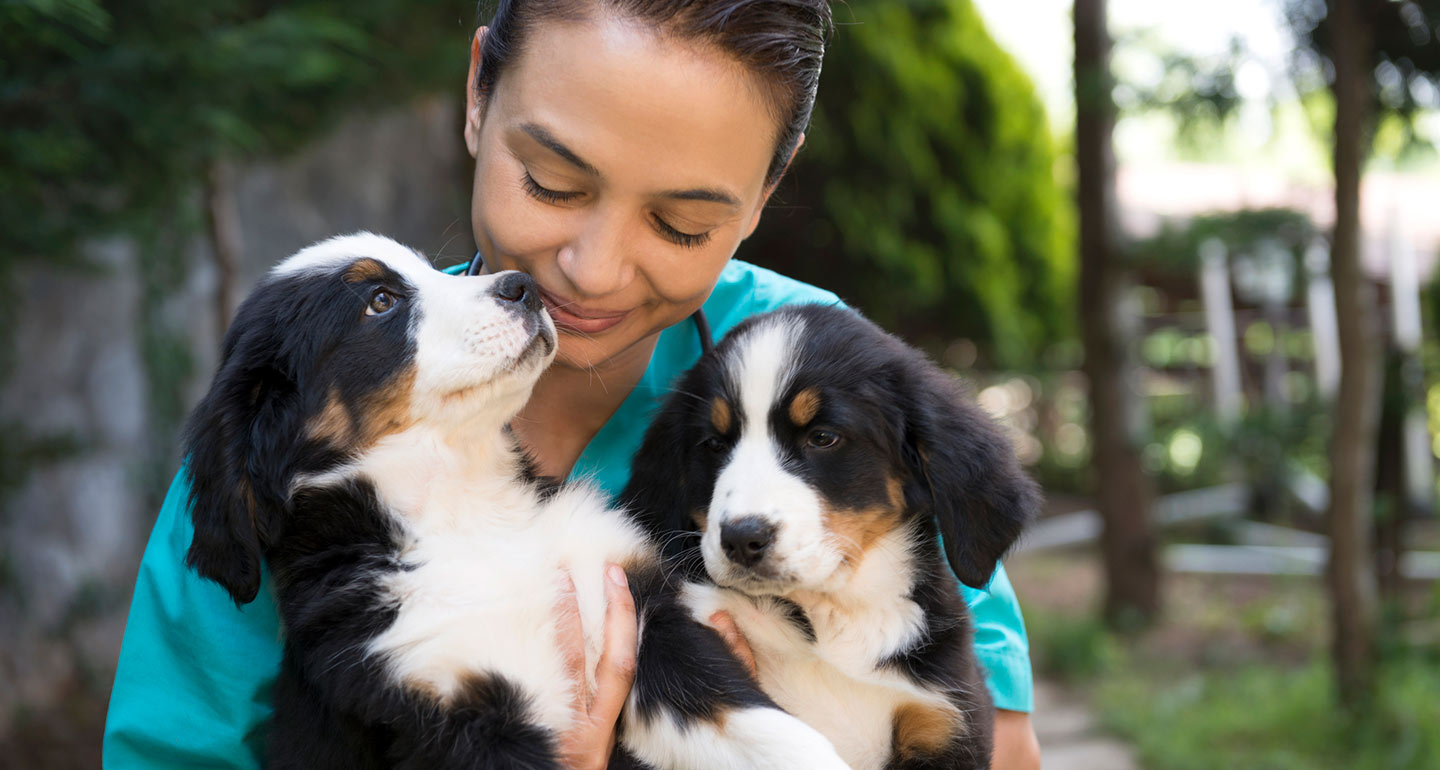 questions to ask a dog breeder
