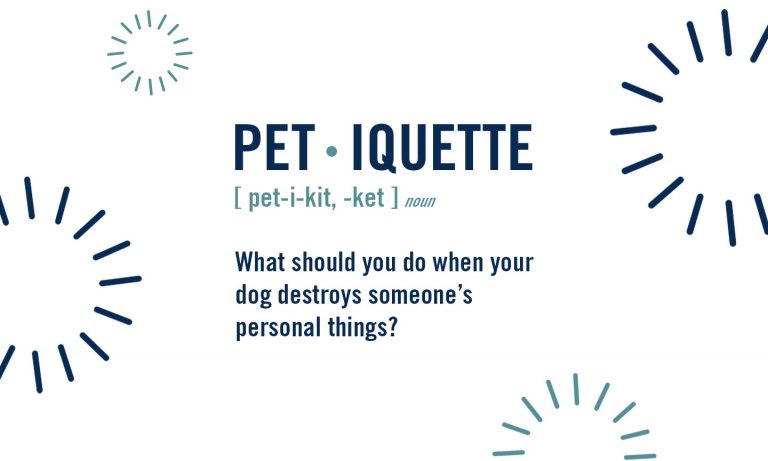 petiquette: what to do when your dog or cat destroys someone's things