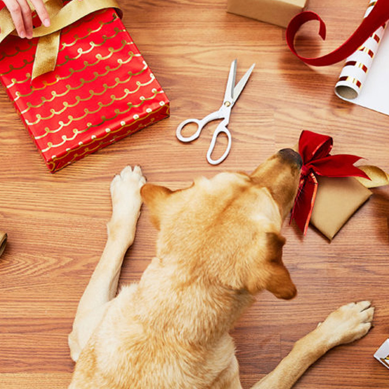 9 Safety Tips For Holiday Decorating With Pets