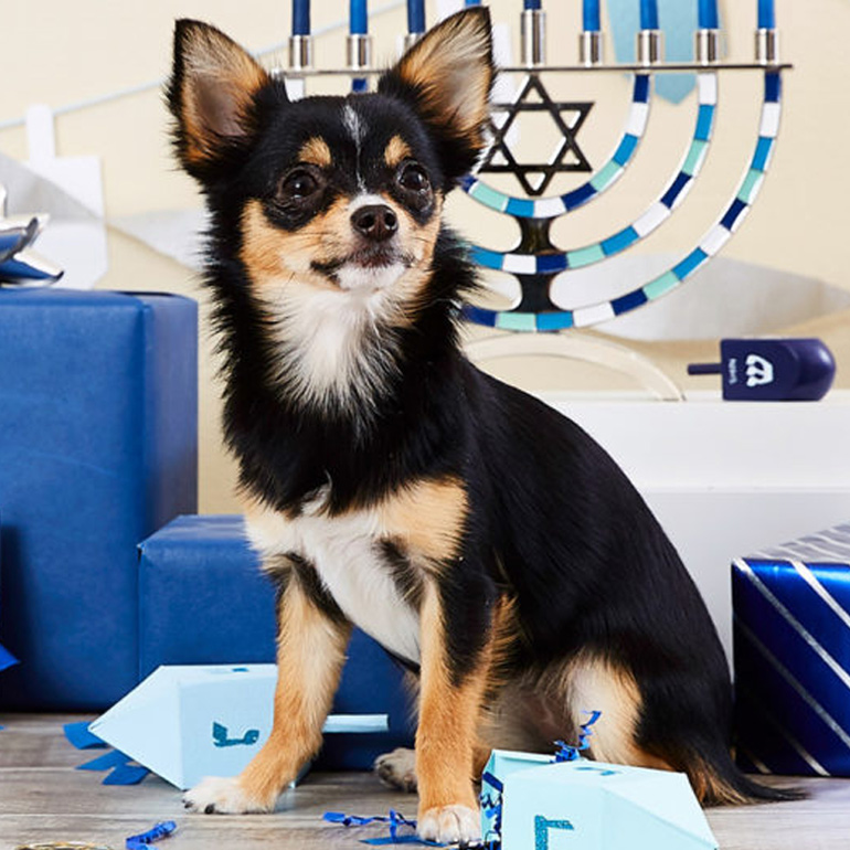 Your Guide To A Safe Hanukkah With Pets