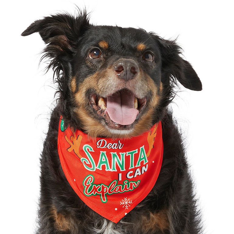 "Frisco ""Dear Santa, I Can Explain"" Dog & Cat Bandana"