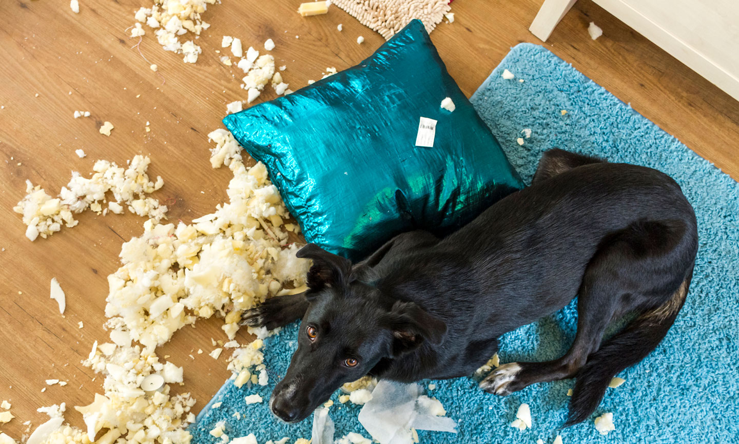 what to do when your dog destroys things