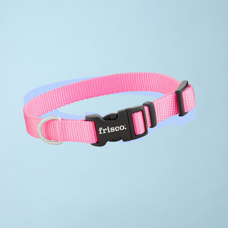 best dog collars - nylon dog collars