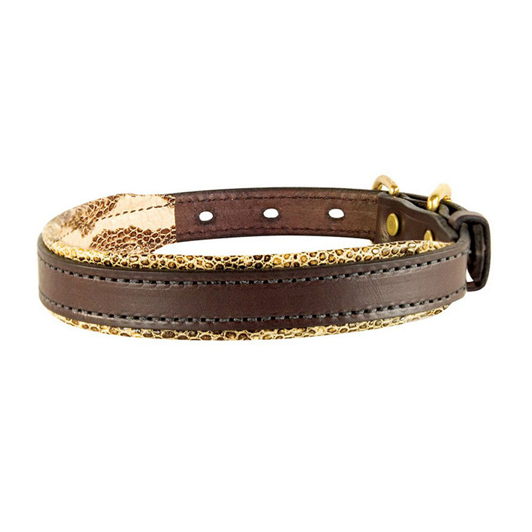 Perri's Havana Padded Leather Dog Collar