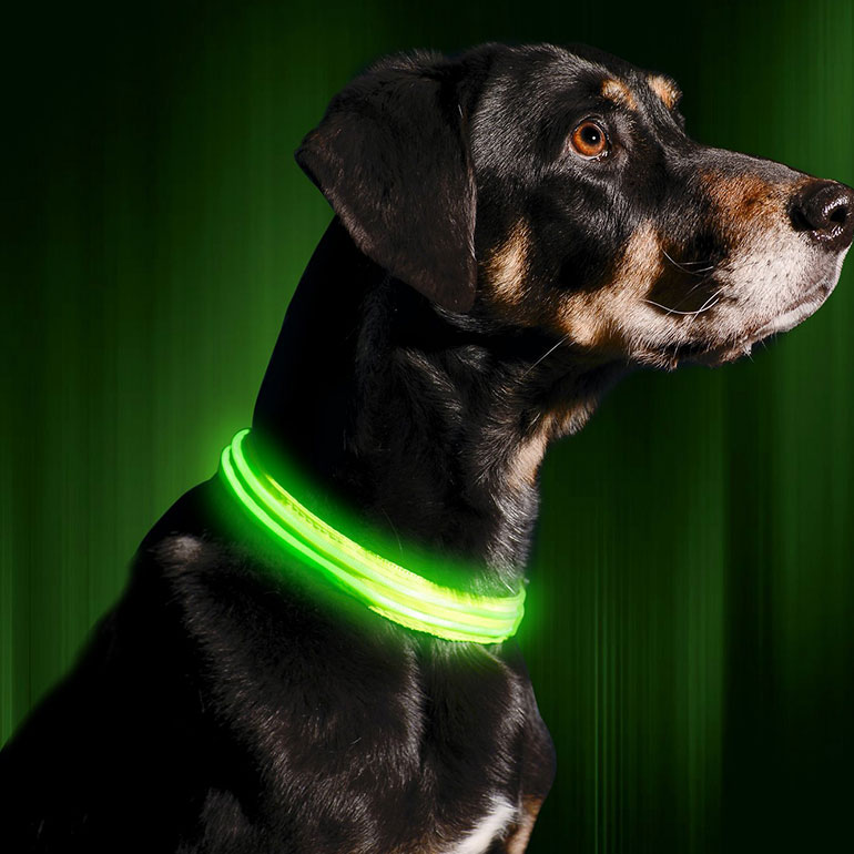 Illumiseen LED USB Rechargeable Nylon Lighted Dog Collar