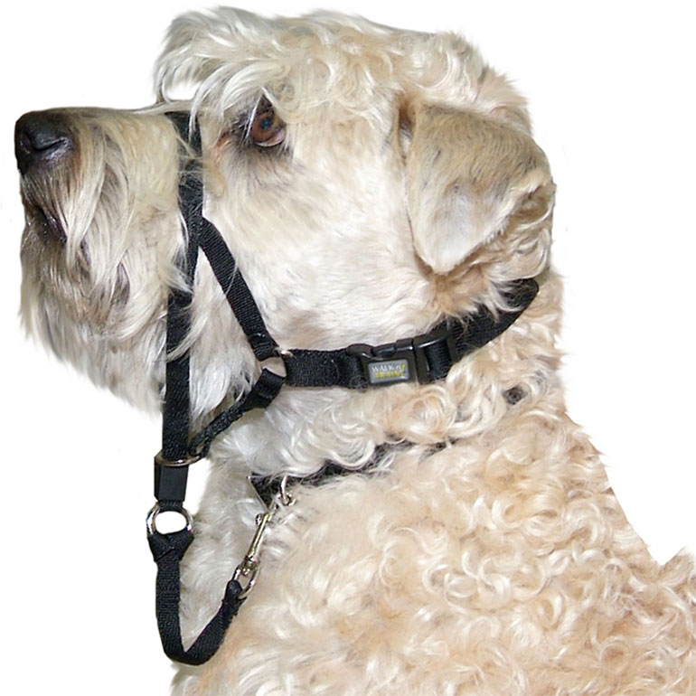 Walk 'n Train Polyester Dog Headcollar