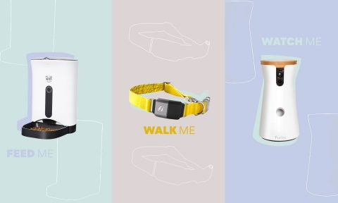 pet tech - 2021 trends smart devices and CES