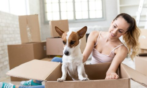 advice adn tips for renting with pets