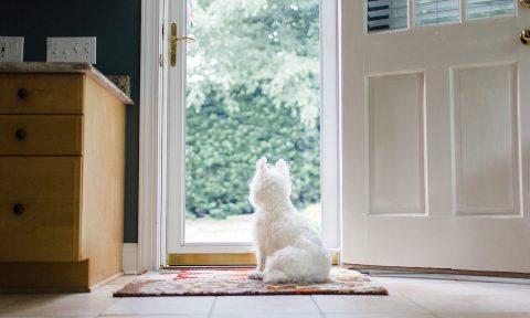 Pet-Friendly Home