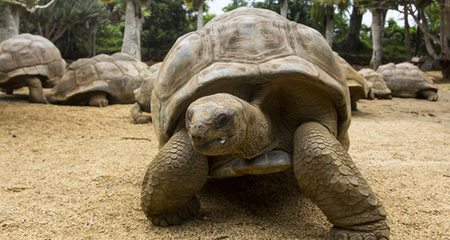 Interesting Facts About Turtles and Tortoises | PetCoach