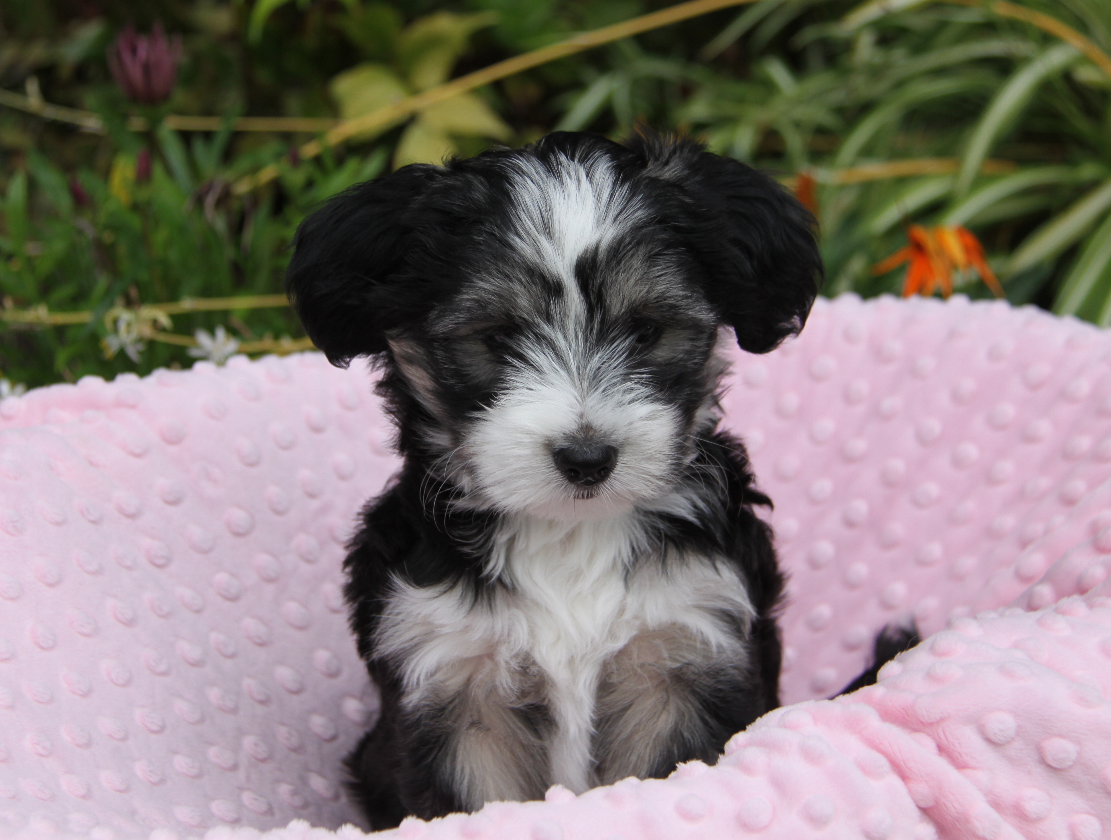 Pet Adoption Event Dogs And Puppies Petfinder Event Calendar