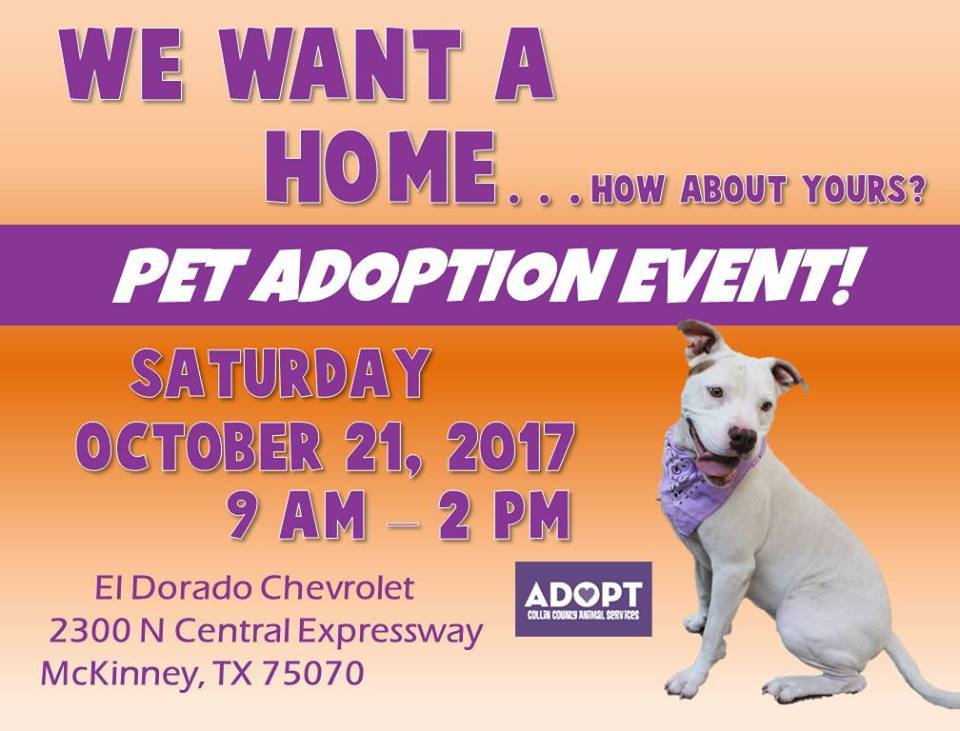 El Dorado Chevrolet Adoption Event Petfinder Event Calendar