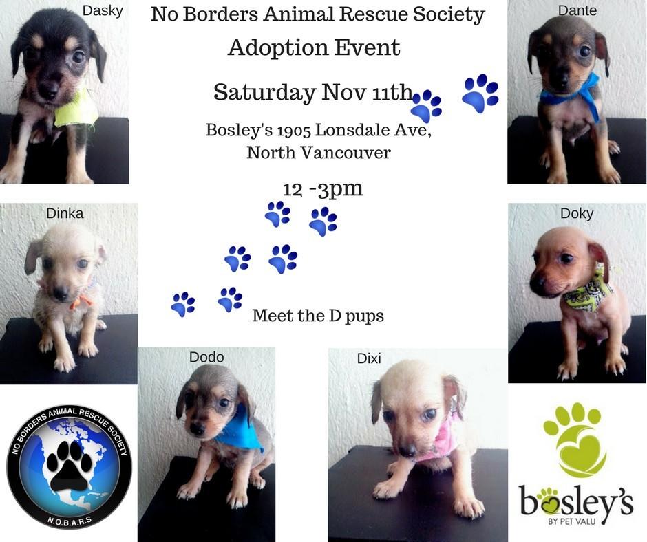 Meet Our D Puppies Petfinder Event Calendar