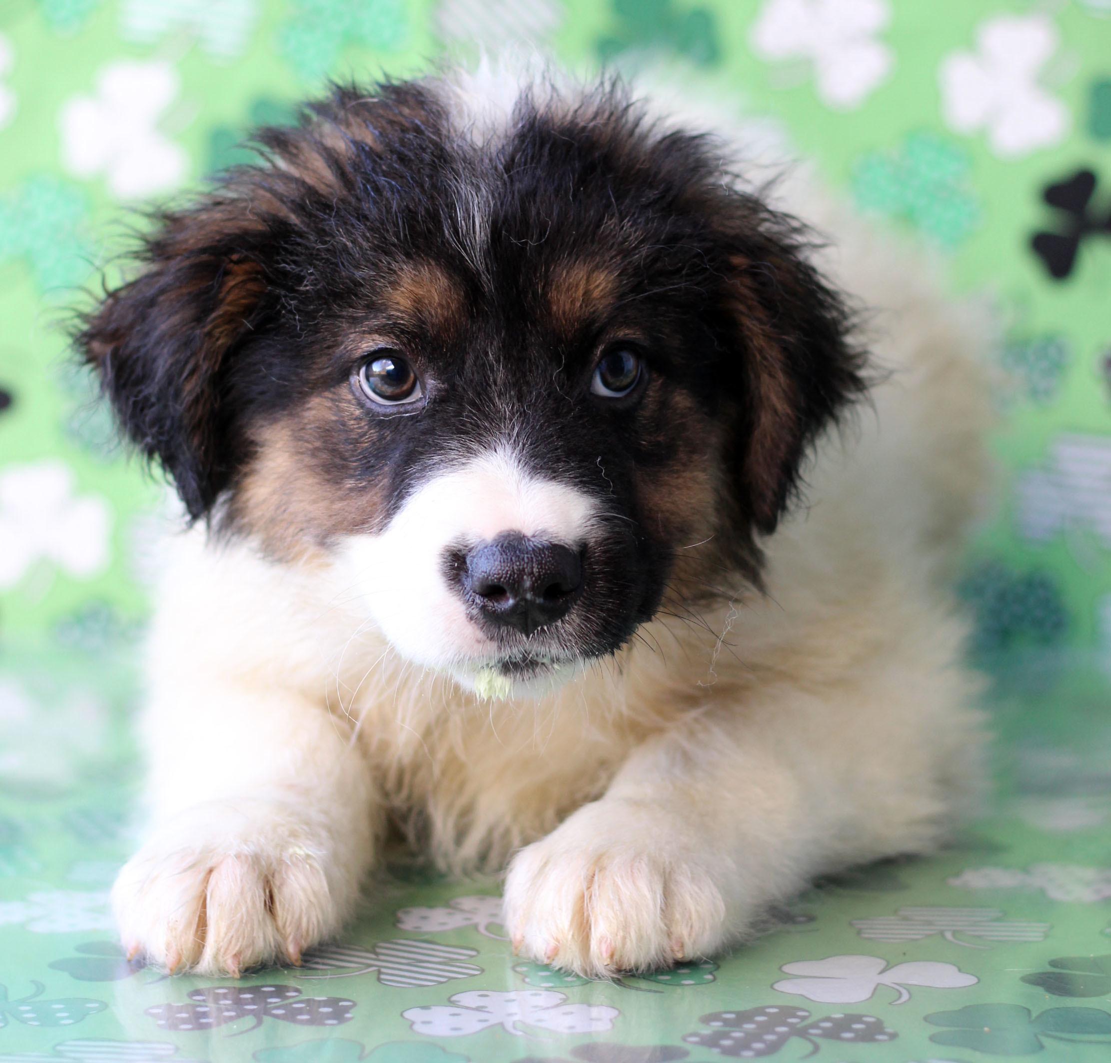 Towson Calendar.Adoption Event At The Towson Petsmart Petfinder Event Calendar