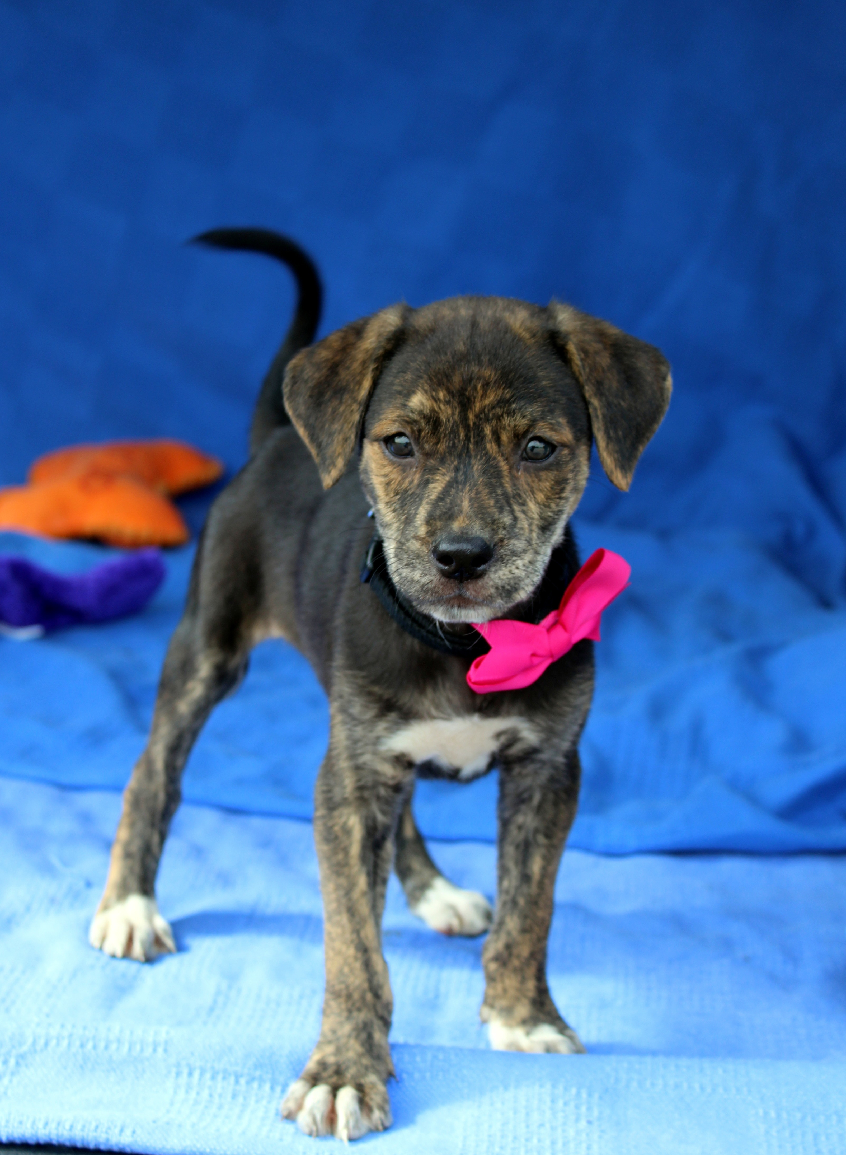 Puppies And Kittens Oh My Adoption Event Petfinder Event Calendar