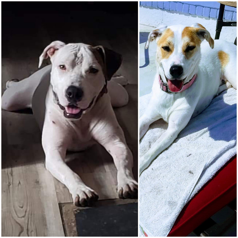 Puppy Love Pet Rescue Petfinder Event Calendar