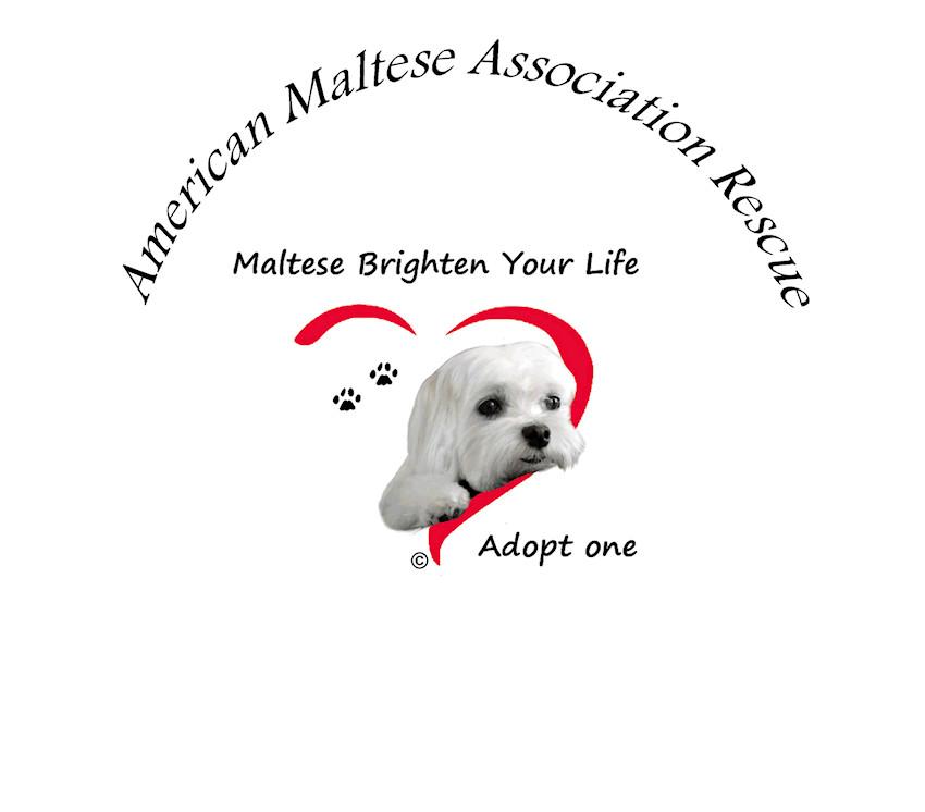 American Maltese Association Rescue