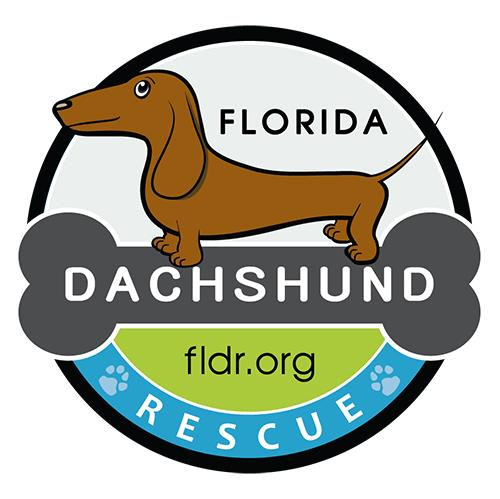 Pets For Adoption At Florida Dachshund Rescue In Winter Park Fl