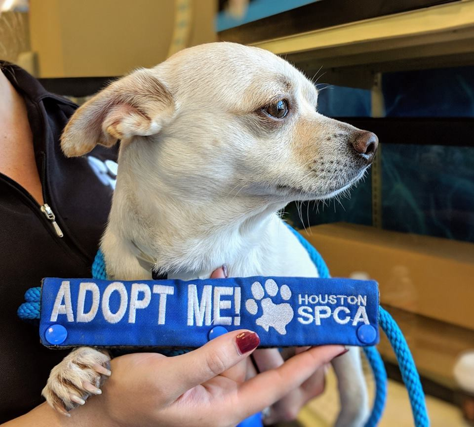 Pets for Adoption at Houston SPCA, in Houston, TX | Petfinder