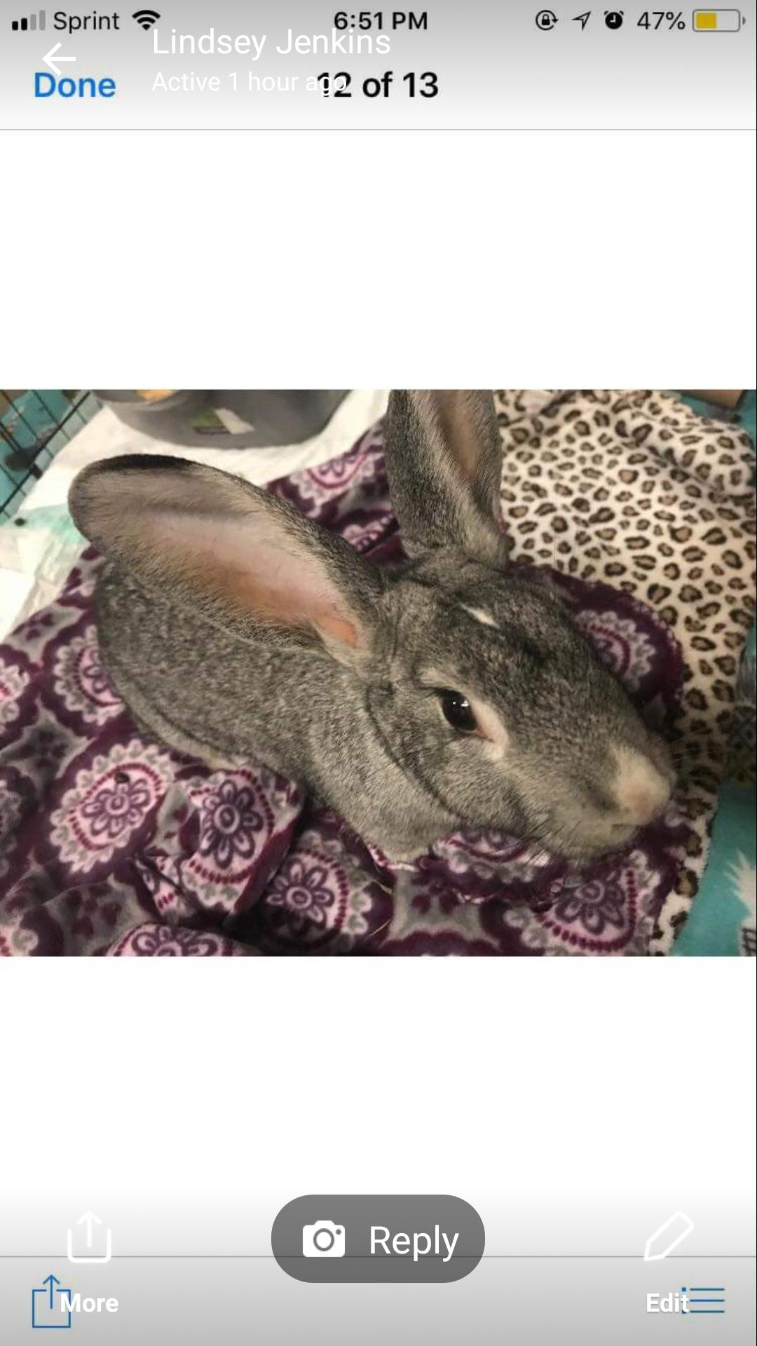 Arkansas Pet Rabbit Network