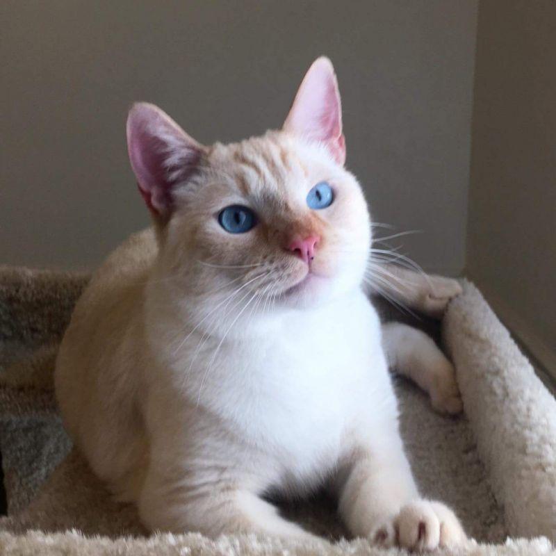 Kramer's gorgeous eyes