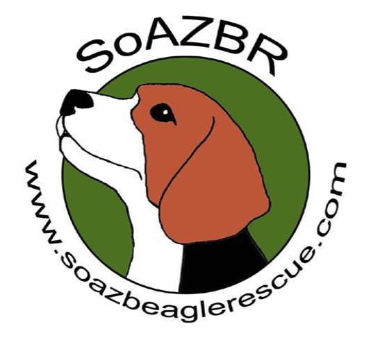 Pets For Adoption At Southern Arizona Beagle Rescue In