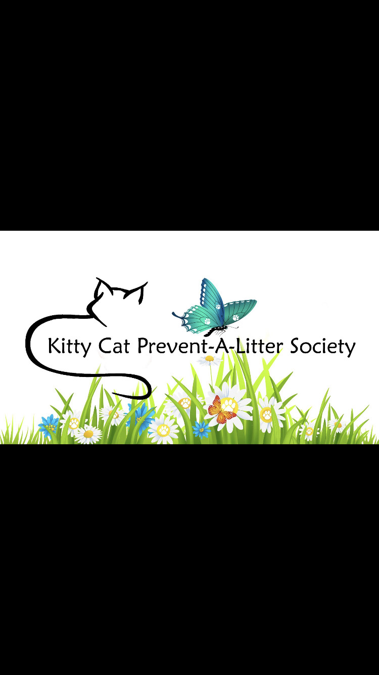 Pets for Adoption at Kitty Cat PALS, in Courtenay, BC