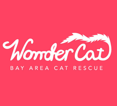 Wonder Cat Rescue