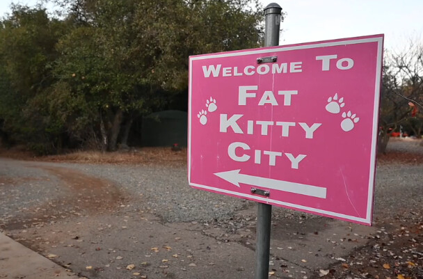 Eleanor ~ Our Fat Kitty City Ambassador
