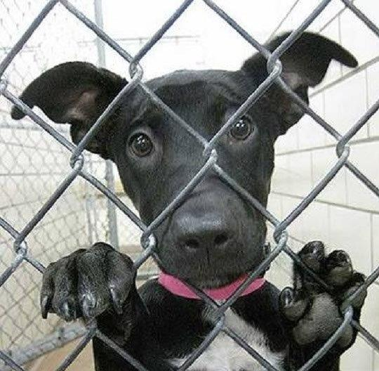 6a6f819b Pets for Adoption at Forgotten Paws Animal Rescue, in San Marcos, CA ...