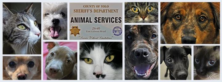 Yolo County Animal Services