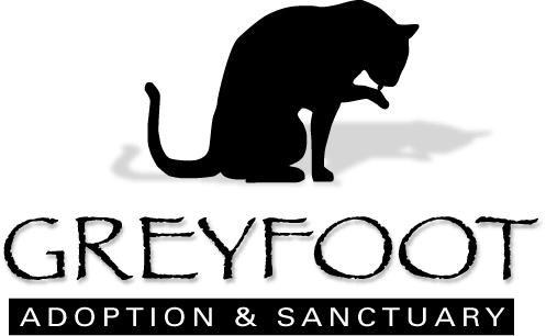 Greyfoot Cat Rescue