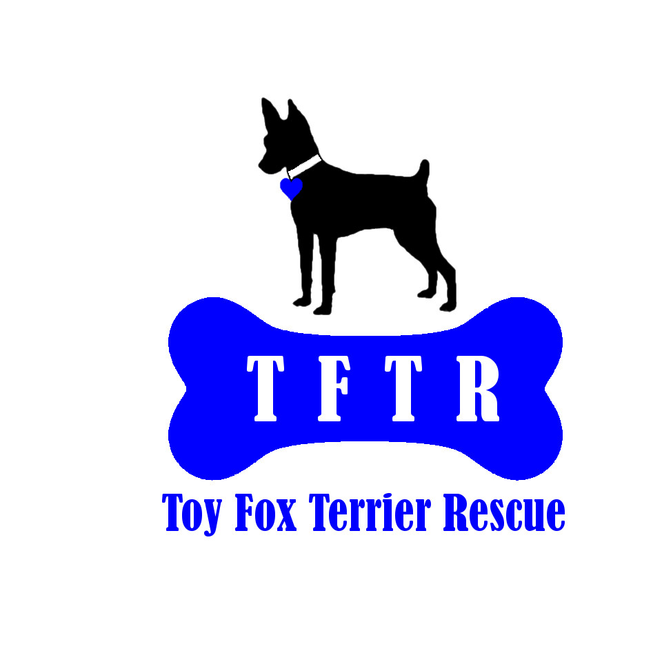 Toy Fox Terrier Rescue, Inc.