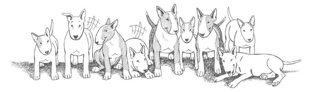Pets for Adoption at Bull Terrier Rescue, Inc , in San