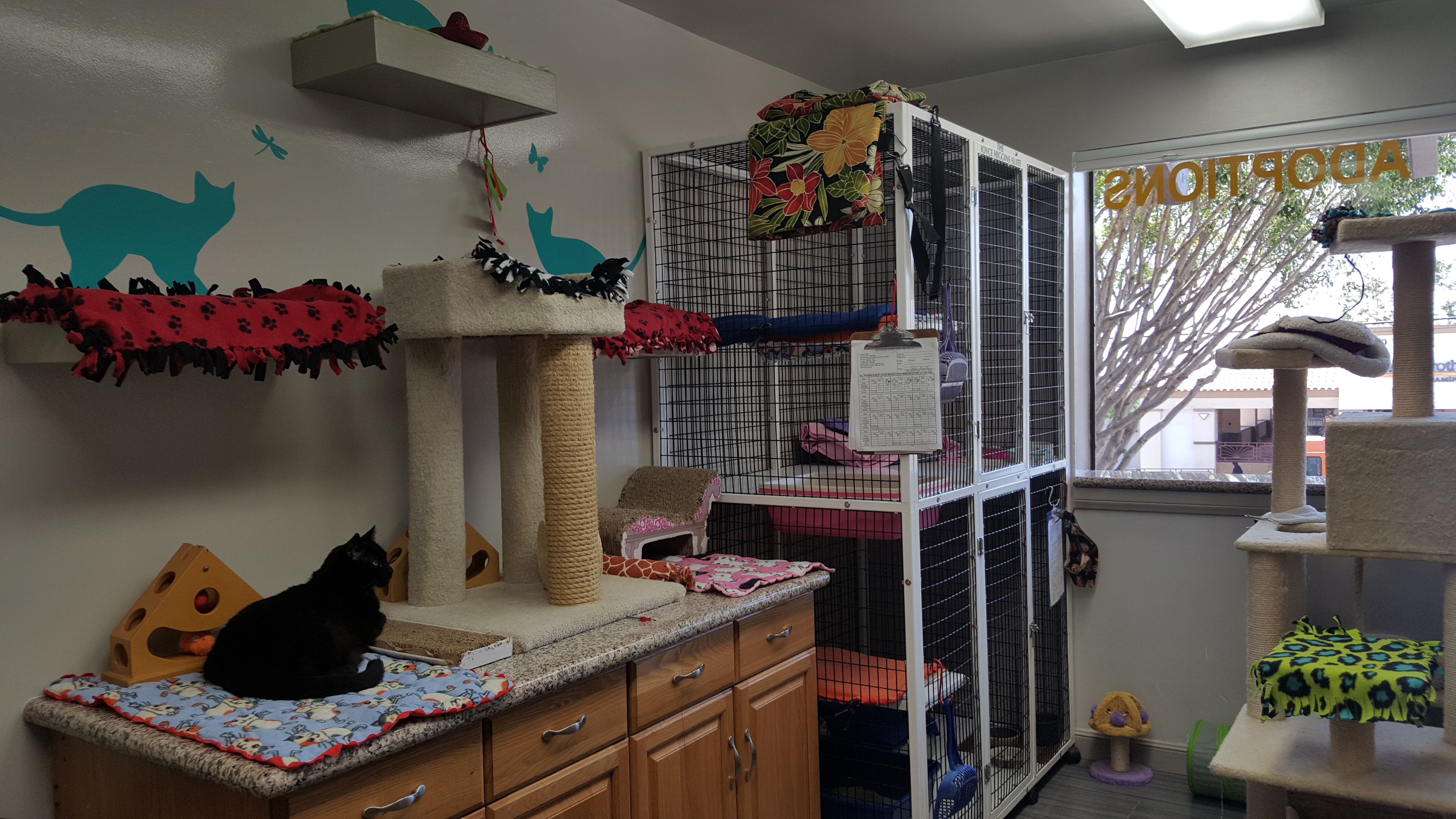 Pets for Adoption at Peter Zippi Memorial Fund Inc, in Hermosa Beach Cat Home Designs Inc on design security inc, design construction, design guild homes, design house inc, design homes ceo, design technology inc,