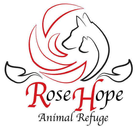 Pets For Adoption At Rose Hope Animal Refuge In Waterbury Ct