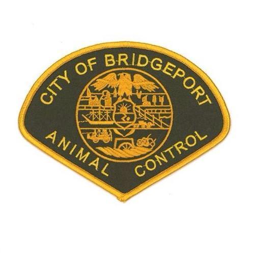 Pets for Adoption at Bridgeport Animal Control Facilites, in