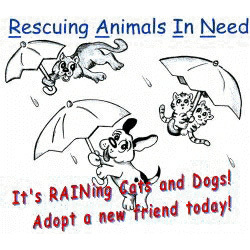 Rescuing Animals In Need