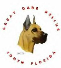 Pets for Adoption at Great Dane Rescue of South Florida, in Jupiter