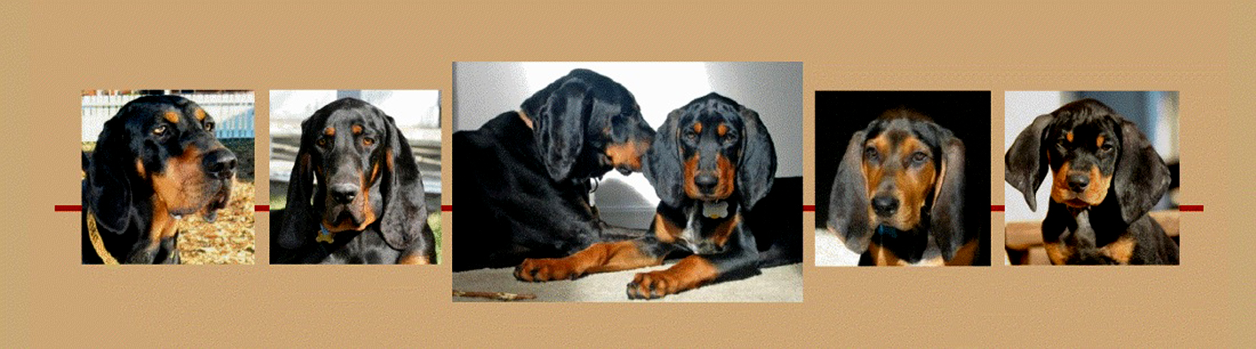 American Black and Tan Coonhound Rescue, Inc.