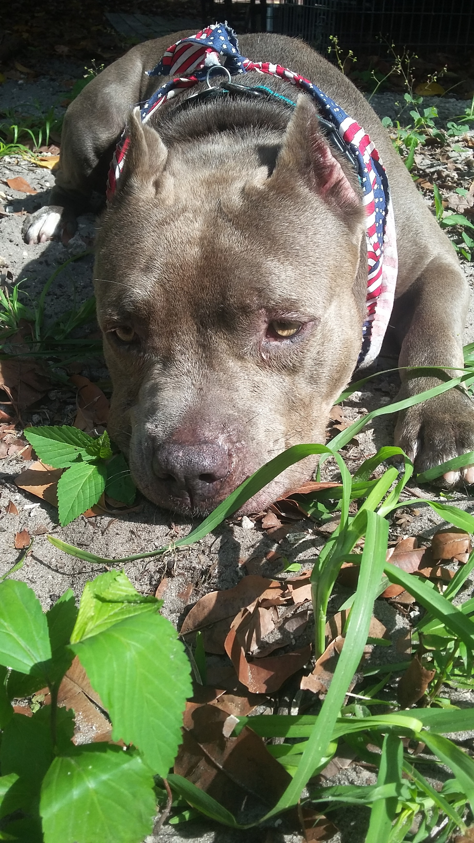 Pets for Adoption at 1 Lucky Dog Rescue, Inc , in Hialeah