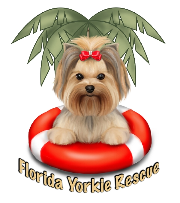Pets For Adoption At Florida Yorkie Rescue In Palm City Fl Petfinder
