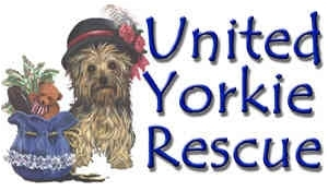 Pets For Adoption At United Yorkie Rescue In Miami Fl Petfinder
