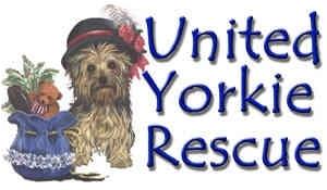 United Yorkie Rescue