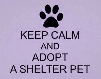 Lee County Animal Shelter