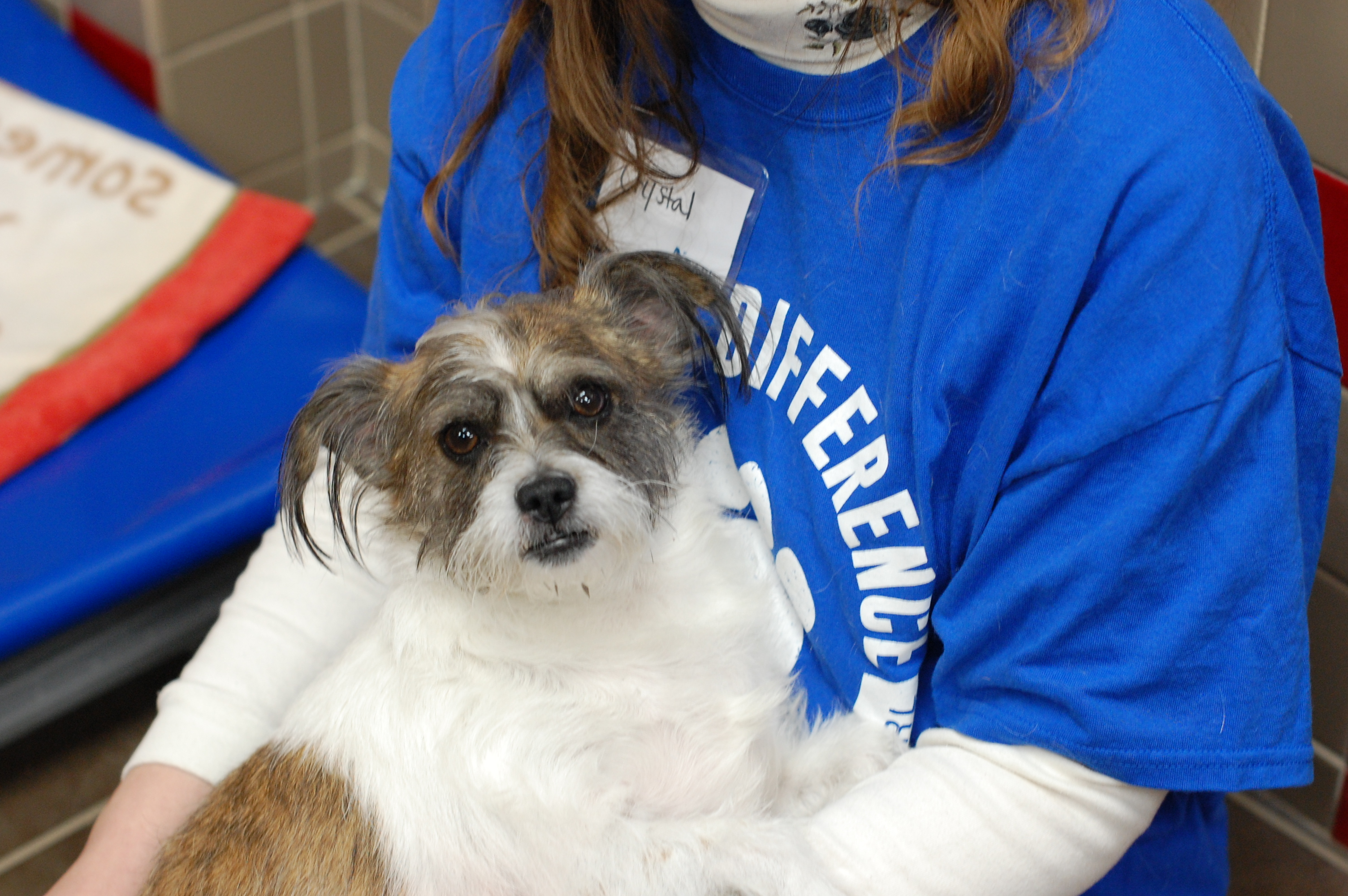Pets for Adoption at Animal Rescue League of Iowa Inc , in