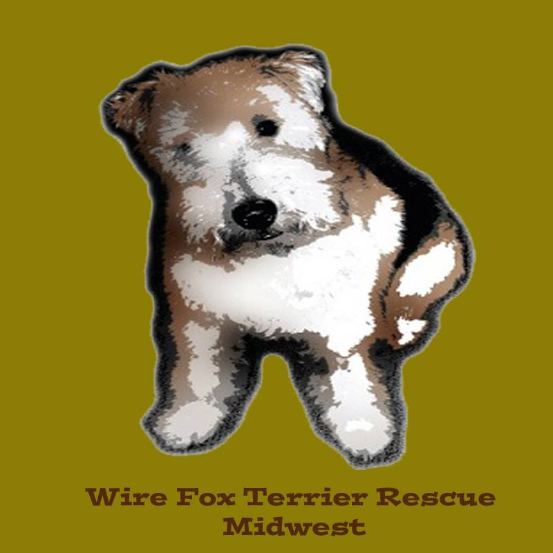 Pets for Adoption at WIRE FOX TERRIER RESCUE MIDWEST, in DUMONT ...